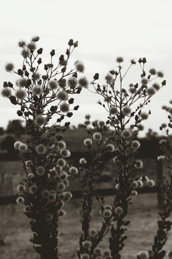 Plant Flower Tree Nature Growth Close-up Beauty In Nature Outdoors The Great Outdoors - 2017 EyeEm Awards