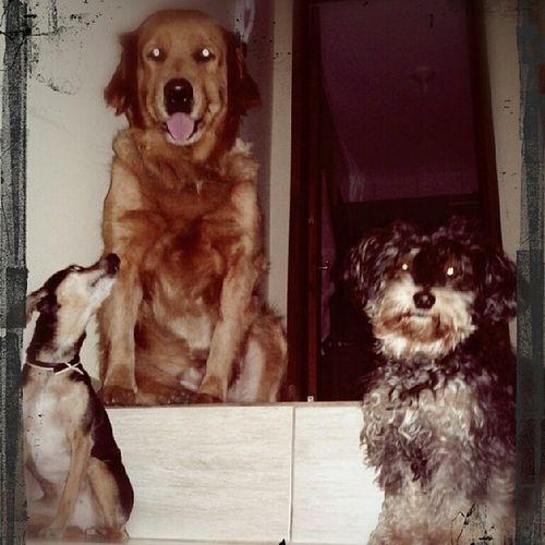Cachorrada fazendo a festa na escada. Pose pra foto...claro!! Não podia faltar!! Dogsinmylife Lovemydogs Sofia Mila hanna