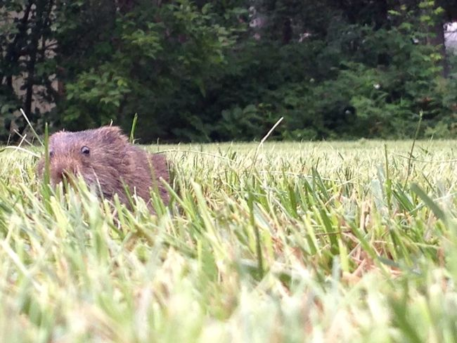 Rawr Animals Pets Grass