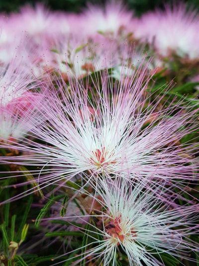Flores Cores