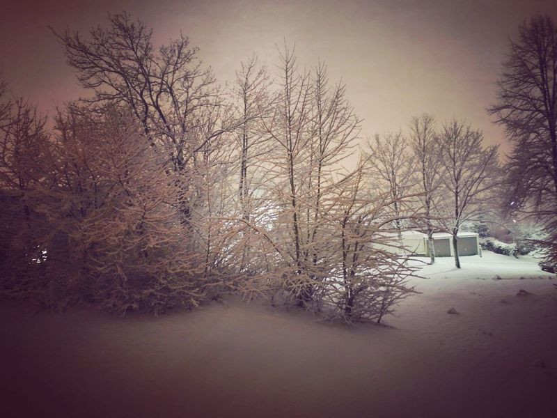 зима 2017 ночная съемка Winter In Deutschland зима в Германии HuaweiP9 Huaweiphotography Huawei P9 Leica HuaweiP9Photography Huawei Photography Huawei P9 Plus HuaweiP9plus Huawei P9 Photos Huawei Shots Huaweip9photos зима зима❄️ снег Nachtfotografie Nachtaufnahme Nightphotography Huawei Photos Tree Winter Snow Bare Tree Cold Temperature Forest Nature Frost Frozen