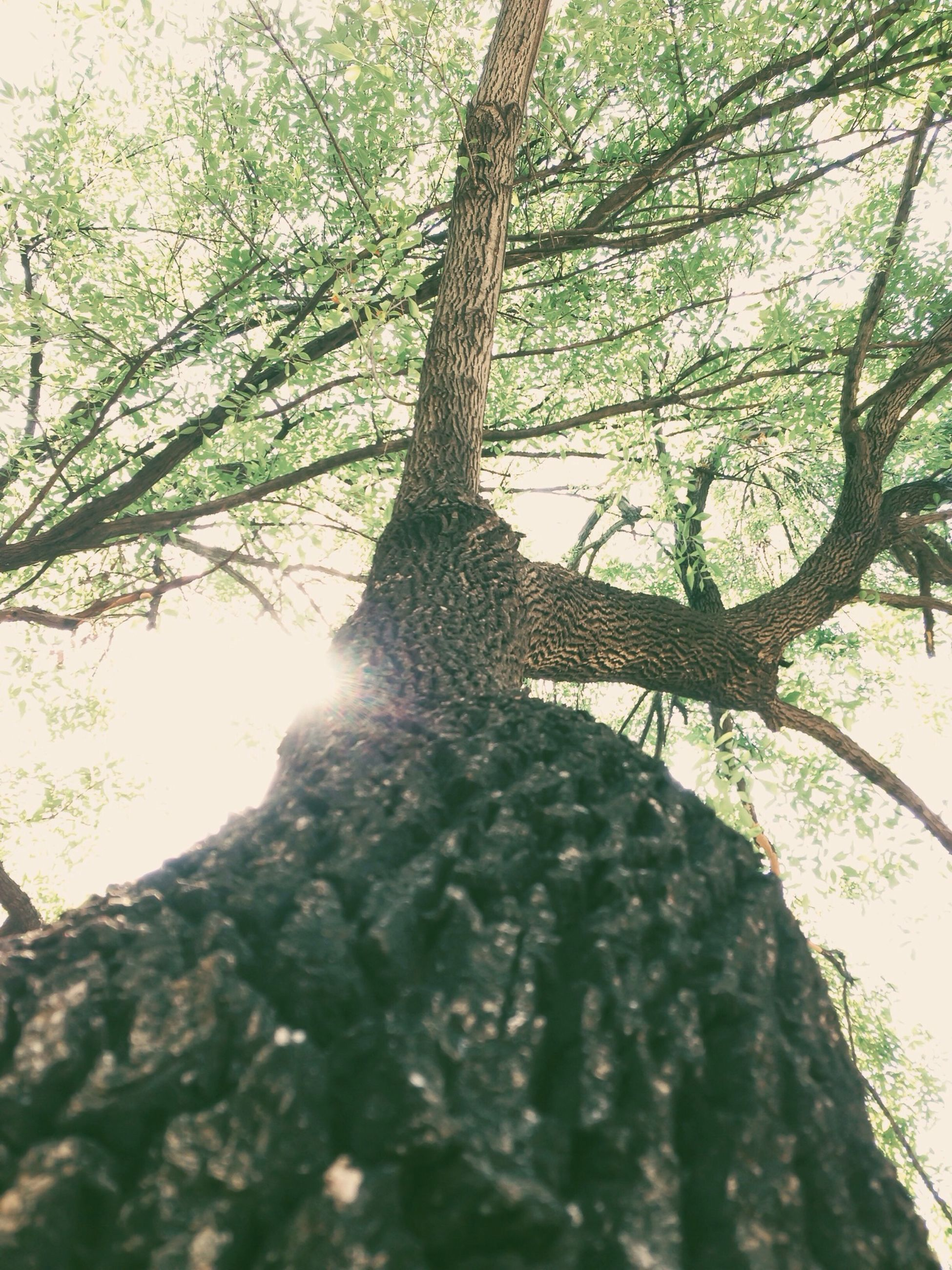 tree, branch, tree trunk, low angle view, growth, nature, tranquility, green color, leaf, sunlight, beauty in nature, forest, day, no people, outdoors, close-up, plant, tranquil scene, wood - material, scenics