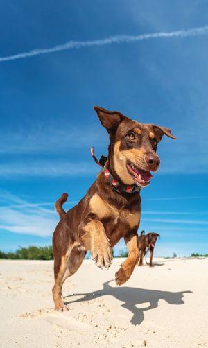 Dog on beach against the sky