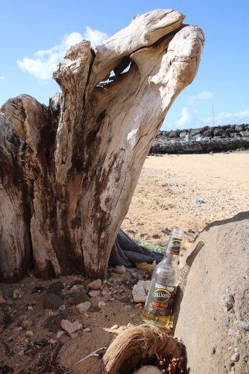 Sky Day Nature Outdoors Scenics Beauty In Nature Driftwood Trash empty beer bottle Beach sand Ala Moana ala Moana Beach park