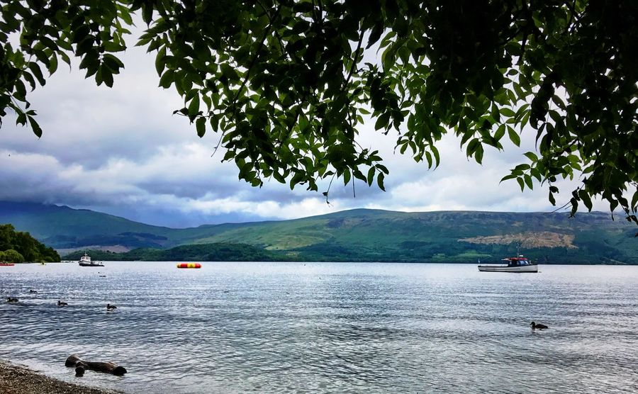On the shores of Loch Lomond United Kingdom Scotland Dunbartonshire Ducks Ducks At The Lake Floating Log Boat Trees Tree Scenics Sky Nature Mountain Beauty In Nature Tranquility Water Tranquil Scene Outdoors Cloud - Sky Mountain Range Nautical Vessel Lake
