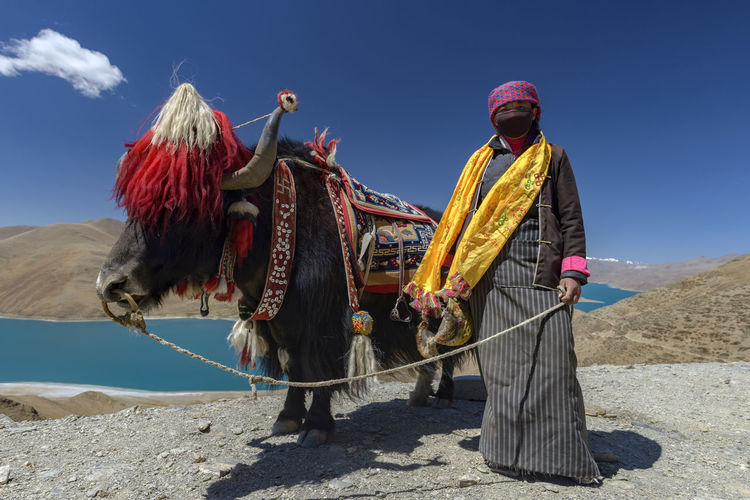 Woman standing with yak by namtso lake