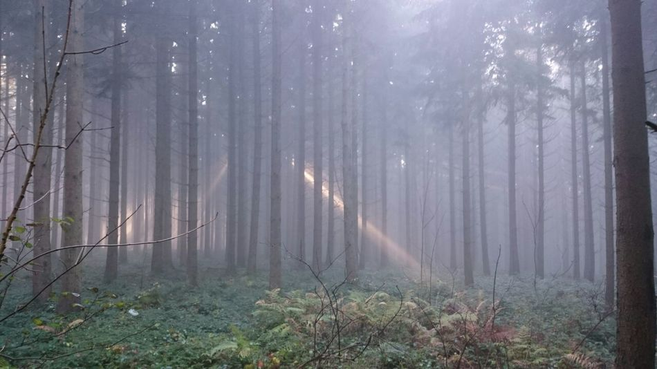 Taking Photos Walk Outdoors Mystery Sun Fog Forest Fall Beauty Nature Sunbeam Landscapes With WhiteWall