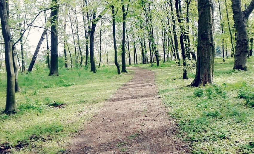 Woods Beutiful  Beutiful Day Beutiful Nature Healthy Lifestyle Climate Mediterranean  Spring Beutiful Weather Clear Sky Beech Brich Grass Leaves🌿 Oak
