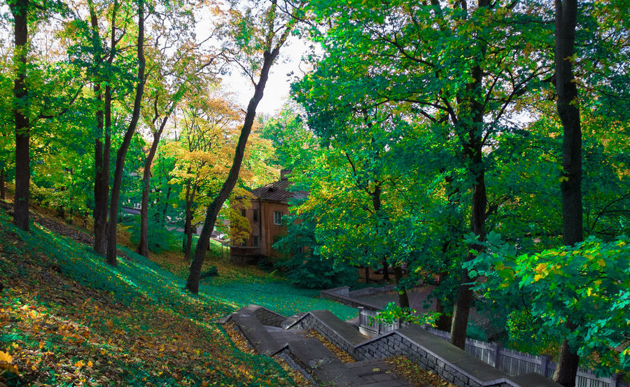 A house in the middle of the park with stairs in the foreground Autumn Beauty In Nature Day Forest Green Color Growth Landscape Leaf Nature No People Outdoors Plant Scenics Tranquil Scene Tree