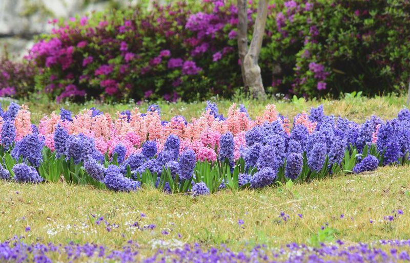 Landscape Plant