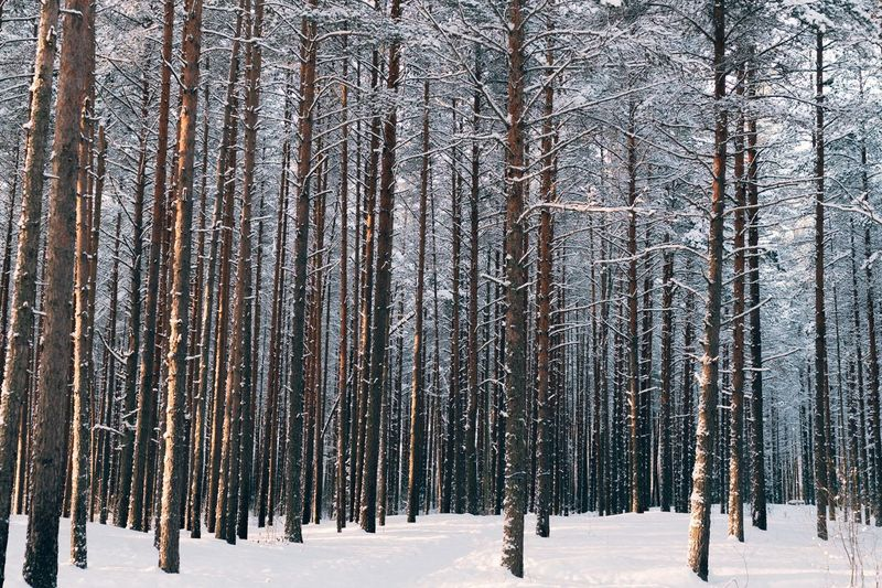 Trip Winter Forest Cold Temperature Snow Winter Plant Environment Tree Land Forest Beauty In Nature No People Nature Day Landscape White Color