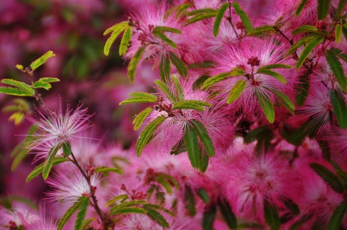 Flower Pink Color Plant Nature Outdoors Beauty In Nature Close-up Day Pink Flowers In Bloom Summer No People Flower Head Fragility Freshness