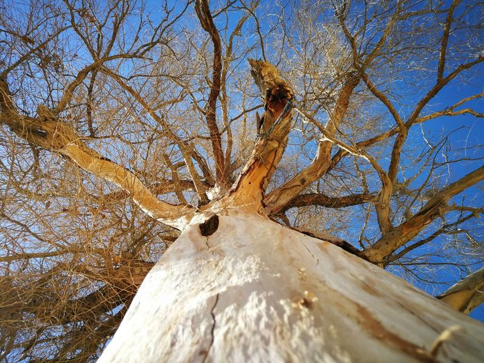 Bare Tree Beauty In Nature Branch Close-up Day Dead Plant Dead Tree Dried Plant Low Angle View Nature No People Outdoors Sky Snow Tree Tree Trunk Winter