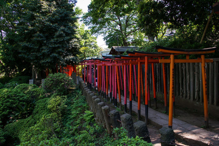 Gate Japanese Shrine Landscape_Collection Landscape_photography Red Red Gate Tokyo,Japan