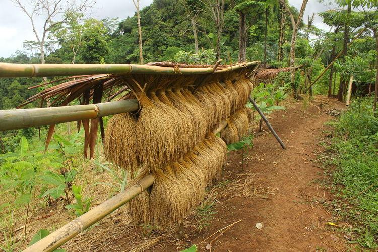 Taken photo in Banten, Urang KenekesOutdoors Beauty In Nature Nature Urang Kenekes