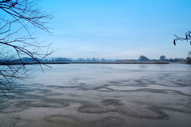 frozen world Reinheimer Teich Nature Photography Beauty In Nature Frozen Nature My Point Of View Nature_collection Frozen Water Tree Bird Cold Temperature Winter Bare Tree Lake Blue Frozen Water Frost Frozen Lake Weather Condition Cold Standing Water Calm Tranquil Scene