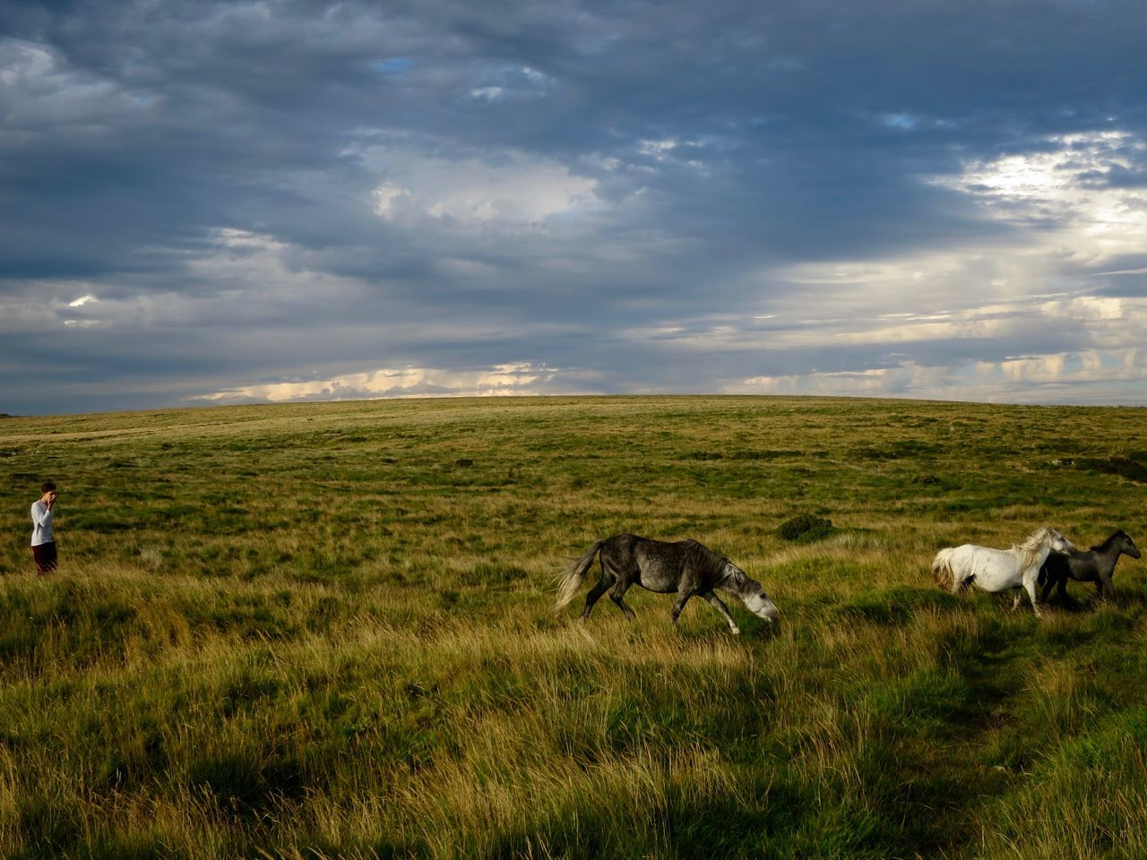 grass, field, cloud - sky, nature, landscape, sky, animal themes, mammal, tranquil scene, beauty in nature, grazing, domestic animals, tranquility, scenics, no people, outdoors, day, green color, growth, tree