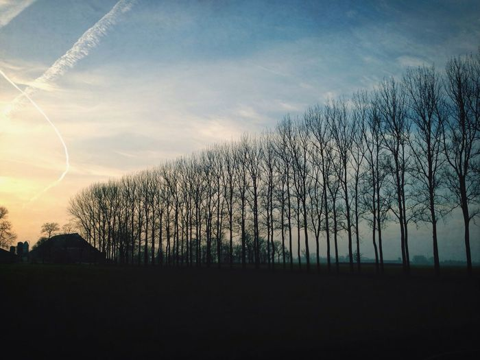 Bare trees on field against sky