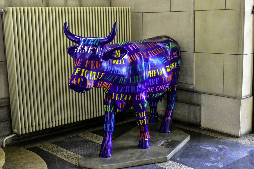 TEXT SKIN Animal Representation Blue Cow Indoors  Night No People