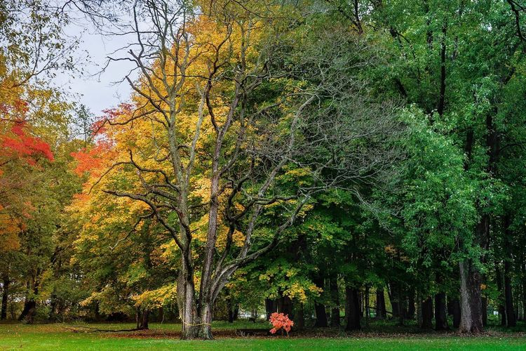Tree Autumn Nature Leaf Beauty In Nature Landscape Outdoors Scenics Yellow Tranquility Nature Tree Autumn