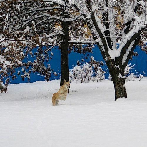 Il cane delle nevi Frida
