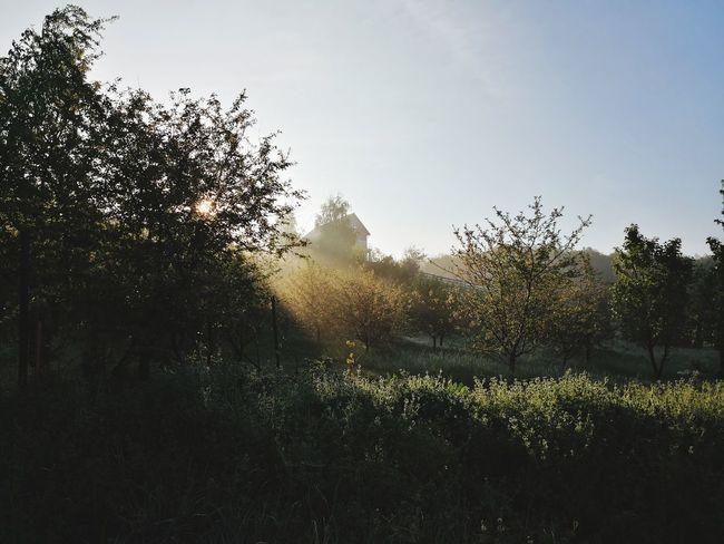 Morning light.