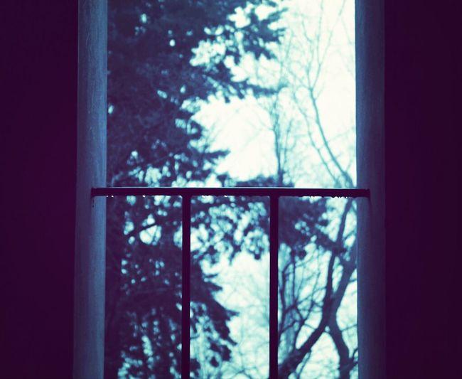 Nature Rain Winter Window The Minimals (less Edit Juxt Photography)