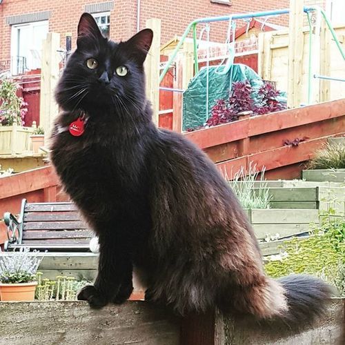 Our wee handsome man. BLackCat Handsomecat Cat Pets Pets Madcat Lovecats Love His name is Dexter