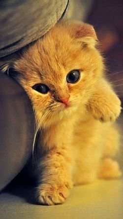 One Animal Animal Themes Pets Domestic Animals Domestic Cat Indoors  Mammal Whisker Feline Looking At Camera Portrait Cat Close-up Yellow Brown Alertness Animal Head  Relaxation Animal Eye Kitten