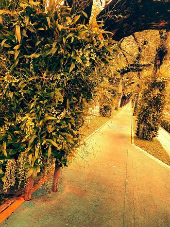Sideways Sidewalk Along The Way Tree Ornamental Plant Plant On Tree View View Photography Landscape Landscape Photography Perspective Perspective Photography Nature Nature Photography Vintage Vintage Photography Orchid Orchid On Tree Orchid Flower Orchids Collection Flower On The Tree Flower Collection
