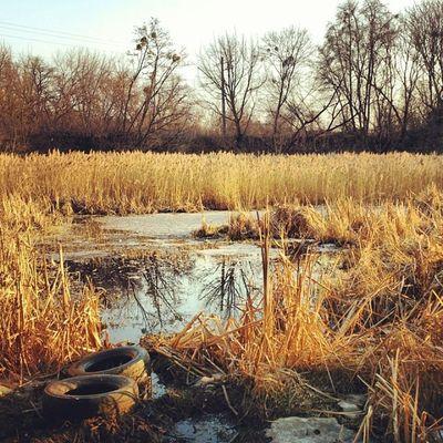 Человек и экосистема сырец болото камыши Syrets spring