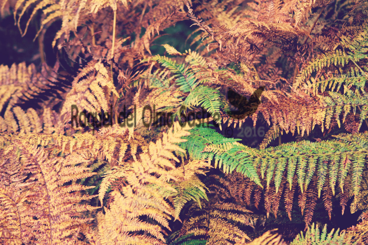 nature, growth, full frame, no people, plant, tranquility, day, backgrounds, beauty in nature, close-up, outdoors