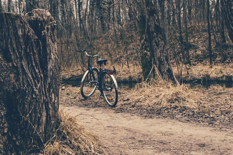 Bicycle parked on footpath in forest