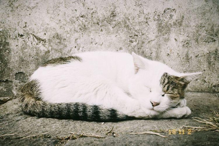 男仔很忙 IPhone7Plus Animal Animal Themes Mammal Cat Vertebrate Feline Relaxation One Animal Domestic Nature No People Domestic Cat High Angle View Pets Sunlight Lying Down Domestic Animals Land Day Resting