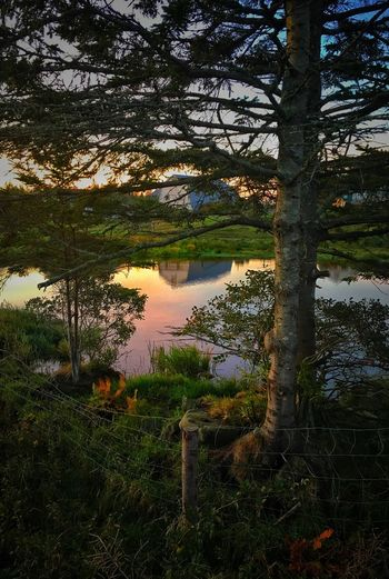 Tree Nature Tranquility Tranquil Scene Beauty In Nature Scenics Water Reflection Growth No People Sky Landscape Forest Outdoors Grass Lake Day Sunset