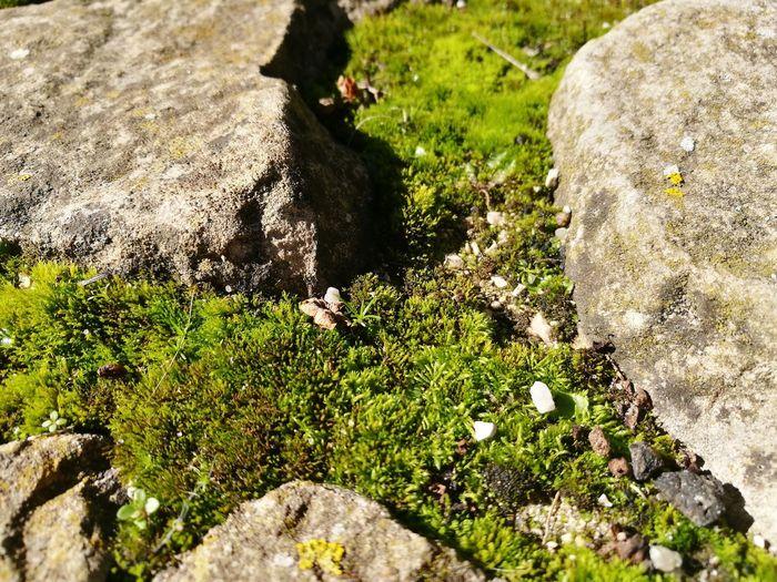 Moss Moss Fresh