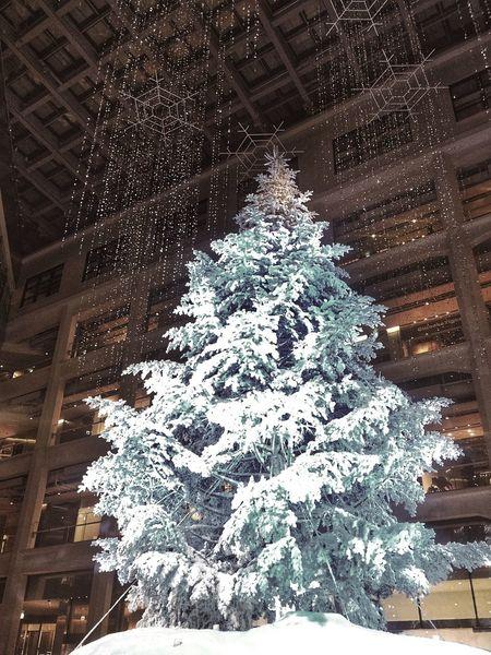 Best Christmas Lights KITTE