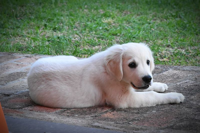 Portrait of dog resting on grass