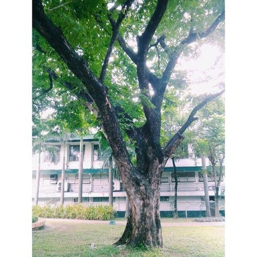 Mr Tree, sir ??? TYK Garden VSCO VSCOPH vscophilippines vscocam