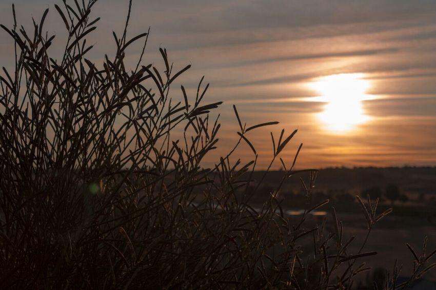 Sunset Landscape_Collection Landscape Nature_collection