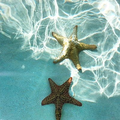Starfish  Estrellademar Playa Mar oceanoclearwatercrystalclearaguacristalinasnorklingarenaarenablancadebajodelmarpiscinadeestrellasadventurespanamameencanta What I Value