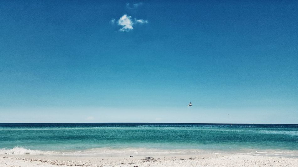 Sea Flying Beach Blue Animal Wildlife Animals In The Wild Nature Animal Themes Scenics Bird Sand Beauty In Nature Outdoors One Animal No People Water Sky Clear Sky Day Horizontal Clouds Colorful Perspective Gulf Coast Ocean