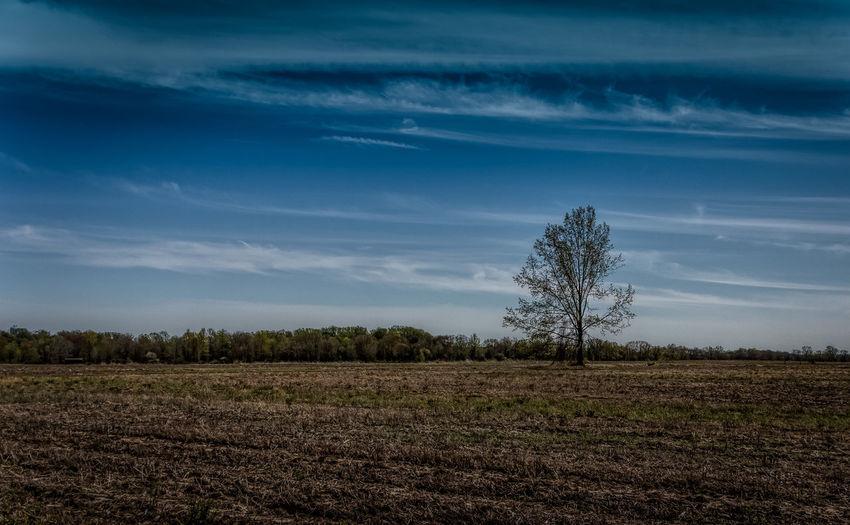 Pole Farm. The Week On Eyem EyeEm Best Shots Showcase: February Landscape Landscape_Collection Landscape_photography Landscapes Landscape_photography New Jersey Trees Tree Meadow Field Fieldscape Fine Art Photography