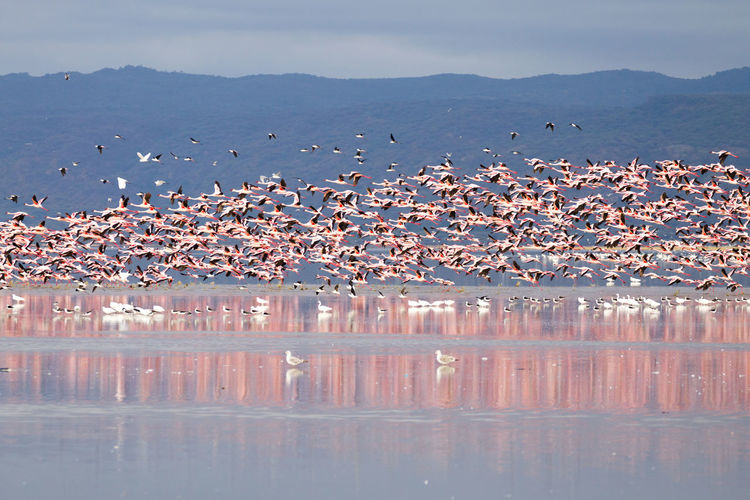 Flock of birds in lake against sky