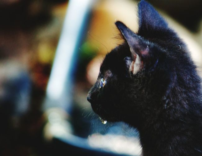 Kitten Check This Out Taking Photos Enjoying Life Profile Picture EyeEm Animal Lover Darryn Doyle Deep Thoughts Wayerdroplets Cats Of EyeEm Enjoying Life Capture The Moment Taking Photos Cat Lovers Cat Colour Of Life