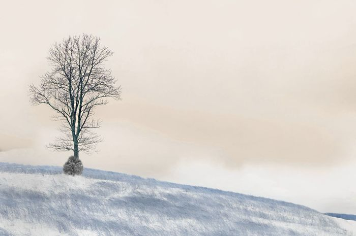 Bare Tree Beauty In Nature Cold Temperature Covering Day Field Fog Foggy Infrared Photograph Infrared Photography Landscape Nature Non-urban Scene Outdoors Remote Scenics Season  Sky Snow Snow Covered Tranquil Scene Tranquility Tree Weather Winter