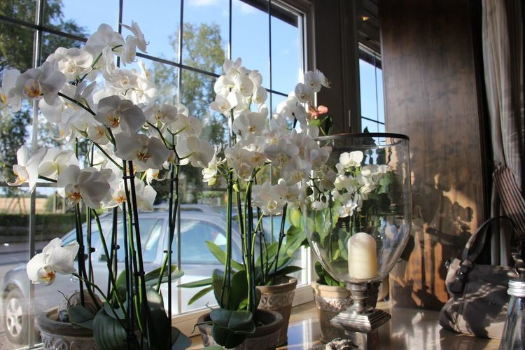 Orchid Orchid Blossoms Beauty In Nature Flowers, Nature And Beauty Enjoying Life White Flower Window Inside Idyllic