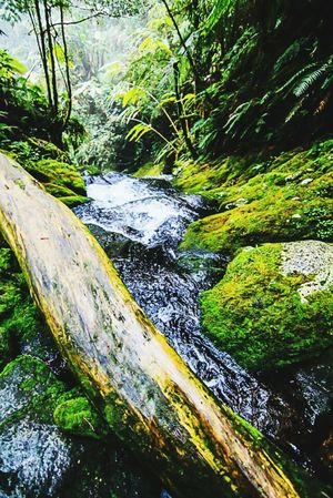 Photo was taken during our Mt. Apo climb last weekend. This is part of a stream inside the mossy forest. Eyeem Philippines Jaysonbalbuenaphotography Saveourwaters Mt.Apo Wilderness Rivers