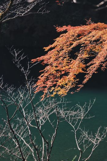 Autumn Autumn colors Autumn Leaves Autumn Colours Autumn🍁🍁🍁 Bare Tree Beauty In Nature Branch Close-up Day Dead Plant Focus On Foreground Growth Lake Land Nature No People Orange Color Outdoors Plant Sunlight Tranquil Scene Tranquility Tree Water The Great Outdoors - 2018 EyeEm Awards