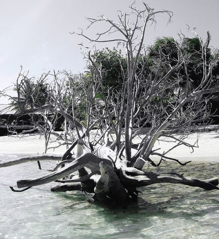 Maldives Blackandwhite Bleached Bleachedtree Check This Out Taking Photos Enjoying Life Enjoying The Moment Beachphotography Beach Life Sunny Day Kuredu Bnw Bnw_collection Black And White Blackandwhite Photography